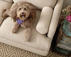 Couch-Fabric-for-Dogs-that-Shed