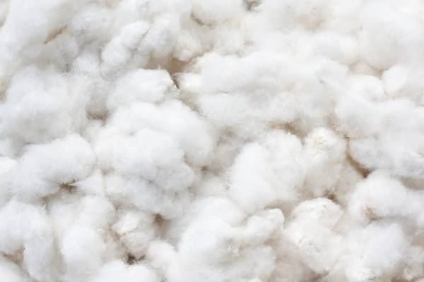 Where-Is-Pima-Cotton-Grown-What-Is-Pima-Cotton-Guide